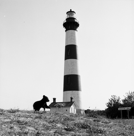 Black Bear cub at the Bodie Island Lighthouse, NC, April 1972