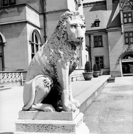 Black Bear cub with stone lion at Biltmore House, Asheville, NC, April 1972