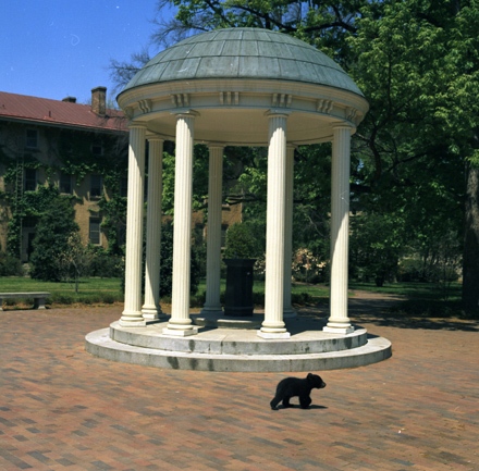 Black Bear cub at UNC-Chapel Hill's Old Well, April 1972