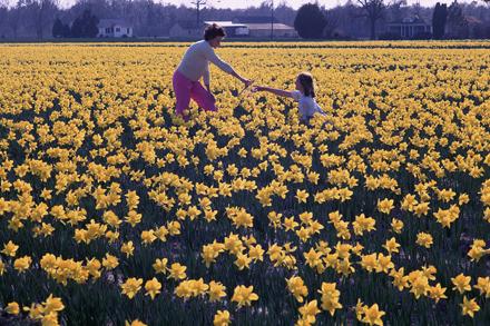 Julia and Catherine [?] Morton in daffodil field at Castle Hayne[s], NC, circa early 1960s
