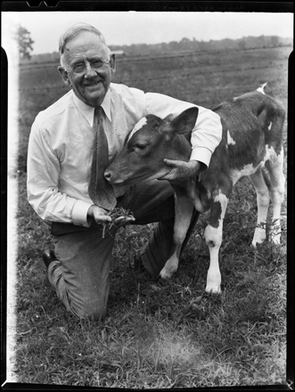 Hugh MacRae with calf, probably at Invershiel farm in Pender County, NC, circa 1940s