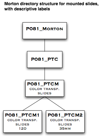 Morton directory structure for mounted slides