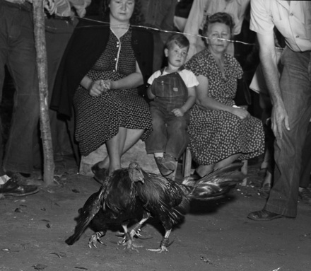 Crowd watching a cockfight, probably North Carolina, circa late 1940s-early 1950s