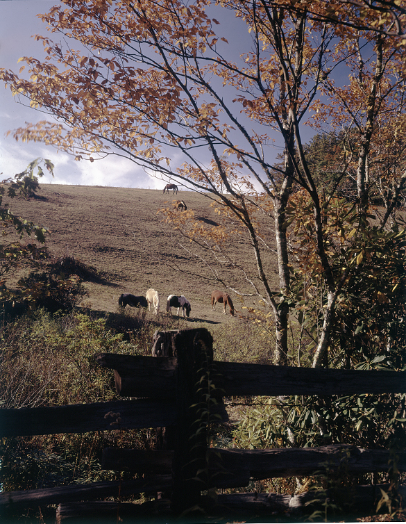 Scenic rural landscape with horses