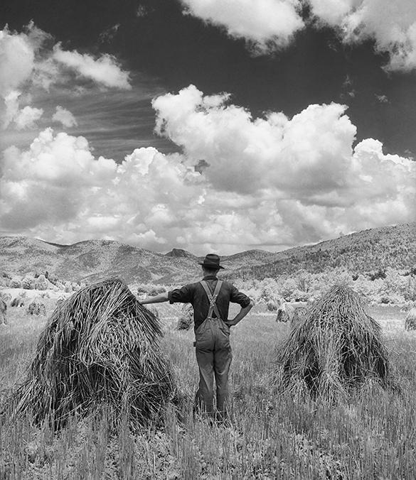 Wheat, Ashford