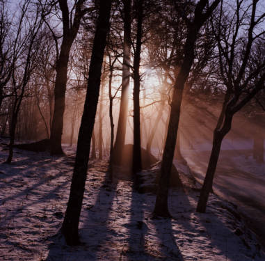 Sunlight in snowy woods as seen and photographed by High Morton.