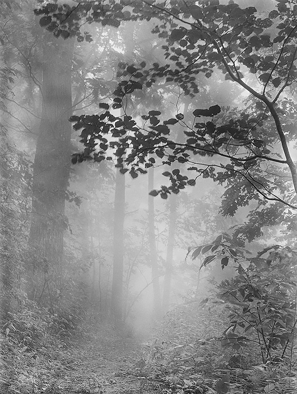 A scan of the same negative as the photograph published in Look at America: The South. Or is it?