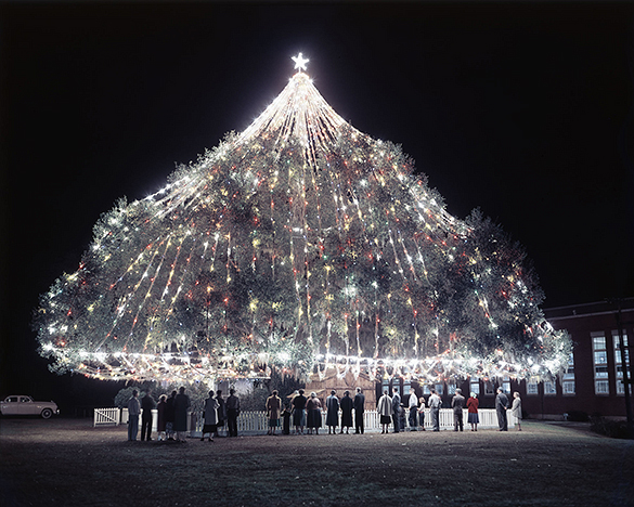 """World's Largest Living Christmas Tree"" in Wilmington, North Carolina. Photographed by Hugh Morton, probably during the 1950s."