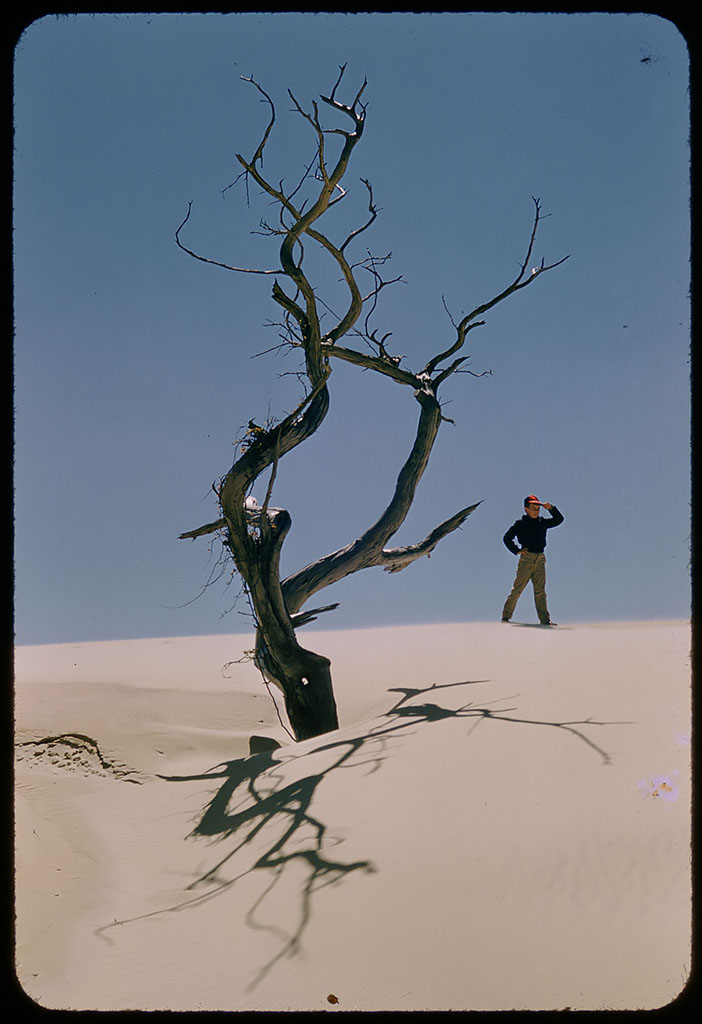 Boy posing on sand dune next to dead tree