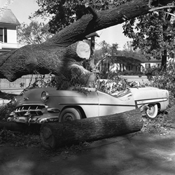 Photo by Roland Giduz of tree fallen on car in Chapel Hill