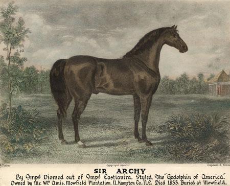 Sir Archie