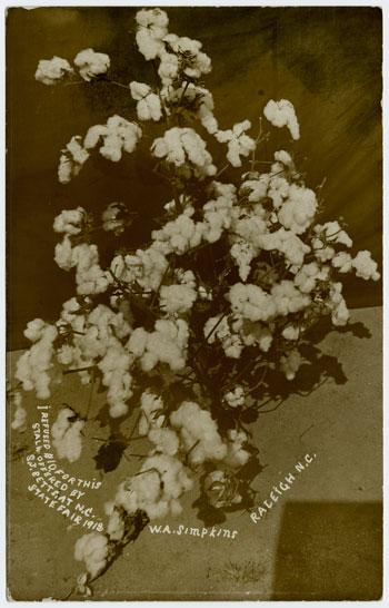 Postcard for W.A. Simpkins cotton