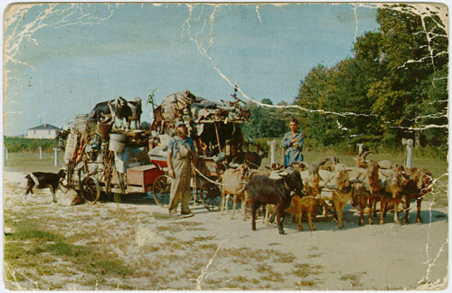 Postcard of the Goat Man with his wagon