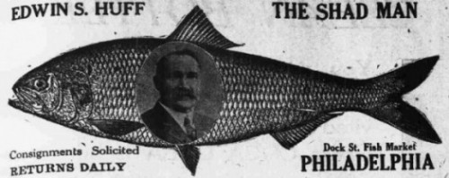 "Portrait of a man on a fish with the title ""The Shad Man"""