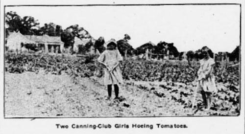 Club Girls Hoe Tomatoes