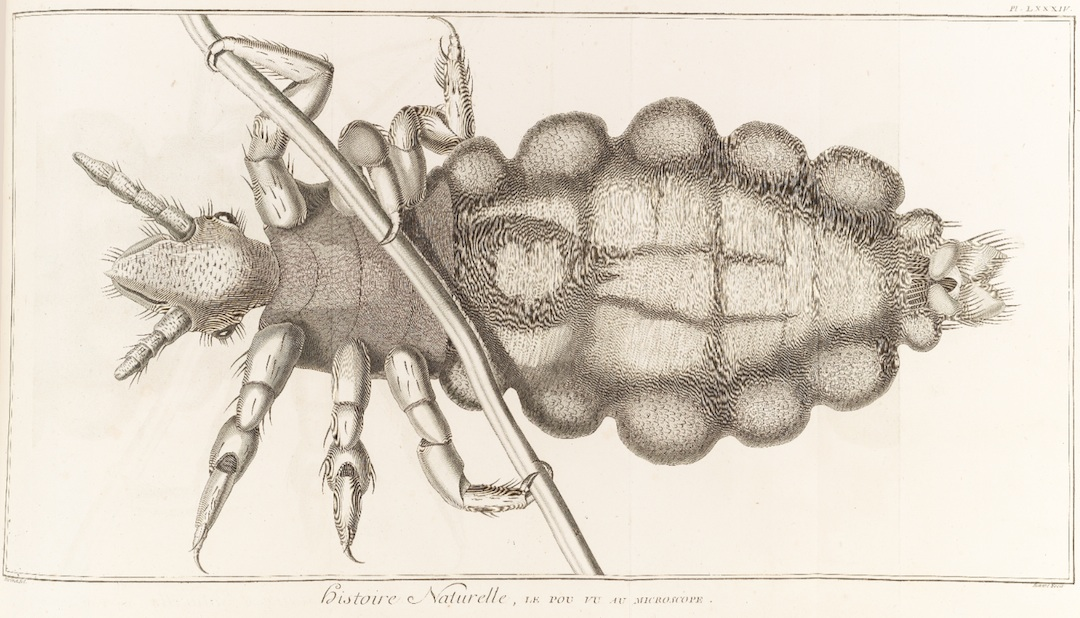 Louse seen through a microscope as rendered in a plate volume of the Encyclopédie (1768) / AE25 .E53 Plates v.6