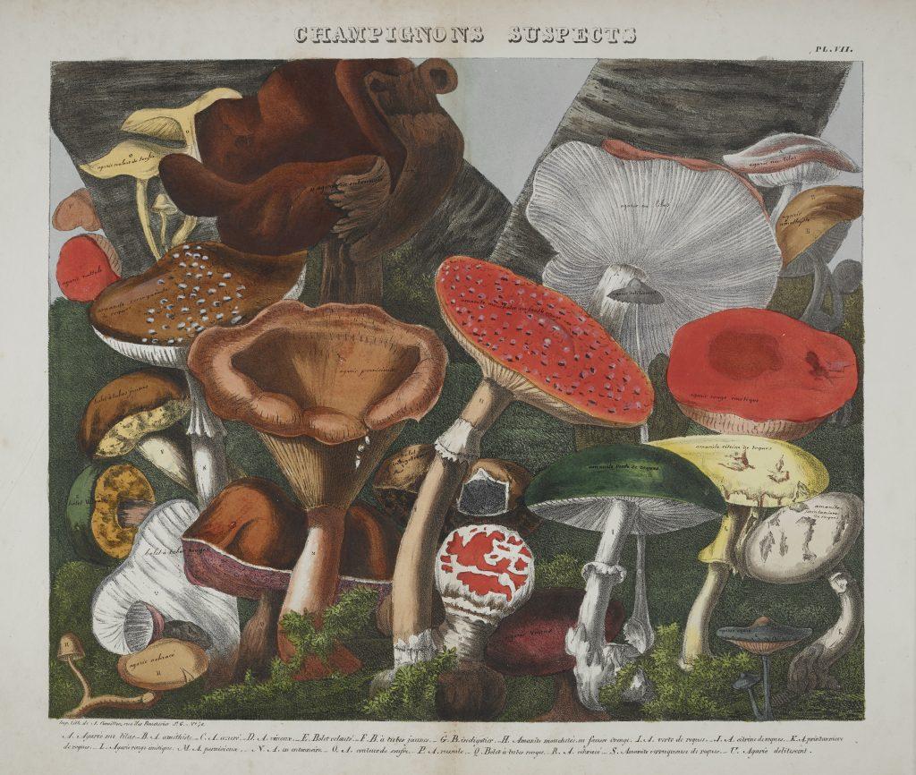 Descourtilz, Des champignons comestibles, suspects et vénéneux (Paris, 1827) / Folio-2 QK617 .D47 atlas