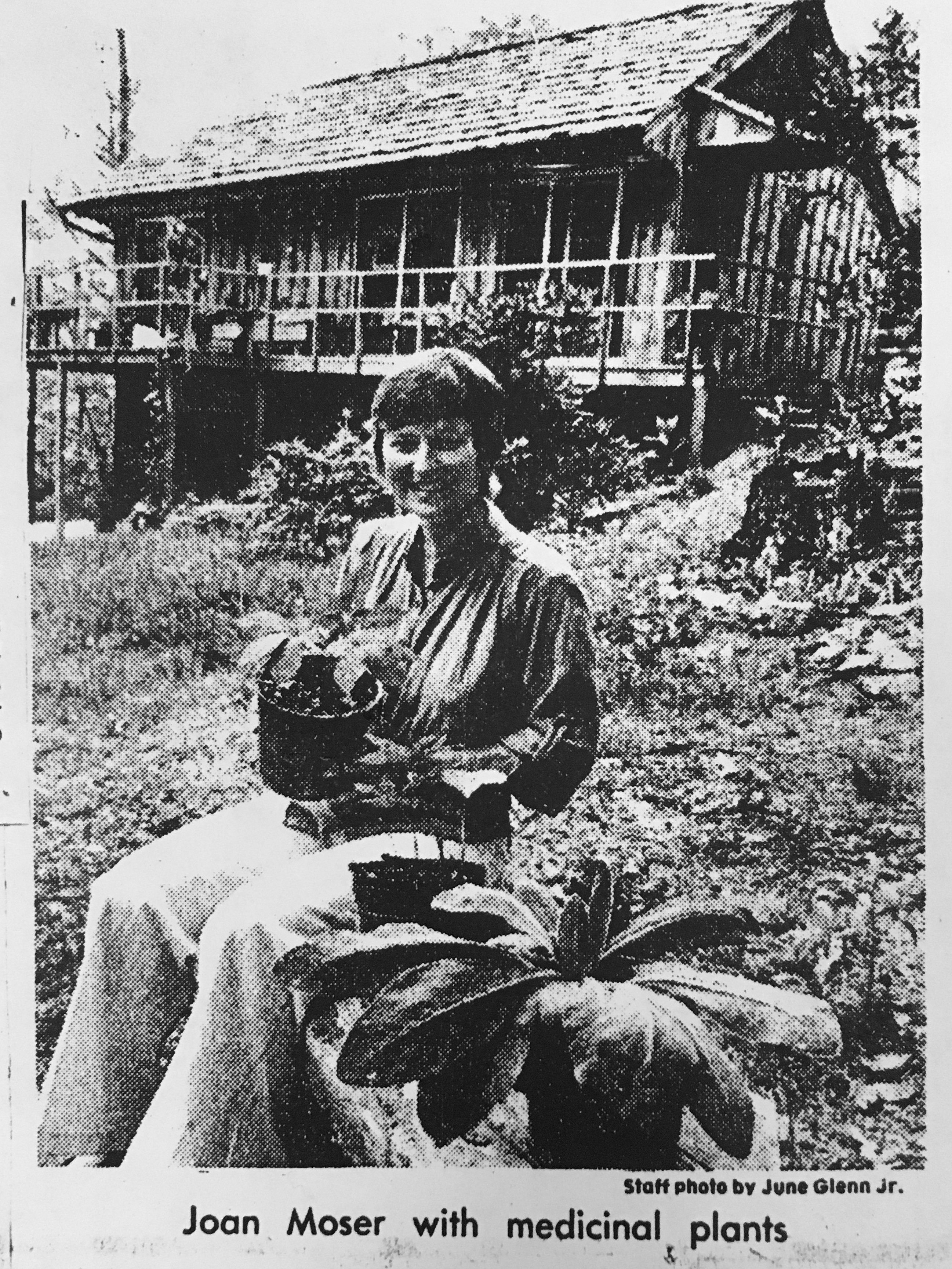 newspaper clipping of Joan Moser holding a medicinal plant
