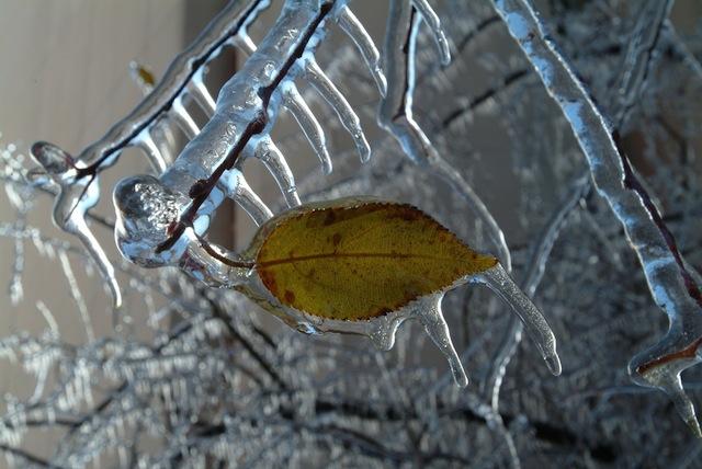 IceStormDec2002_009